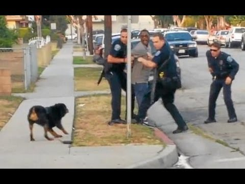 Police Shoot and Kill Dog in Front of Owner (Graphic Video) ютиби видео ютиби узбек кино 2013